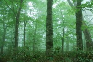 woodtherpy